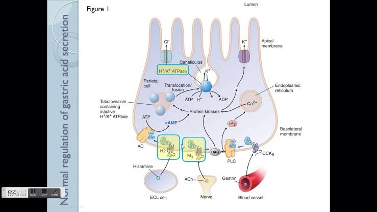 Medicines used to treat Gastrointestinal problems 1